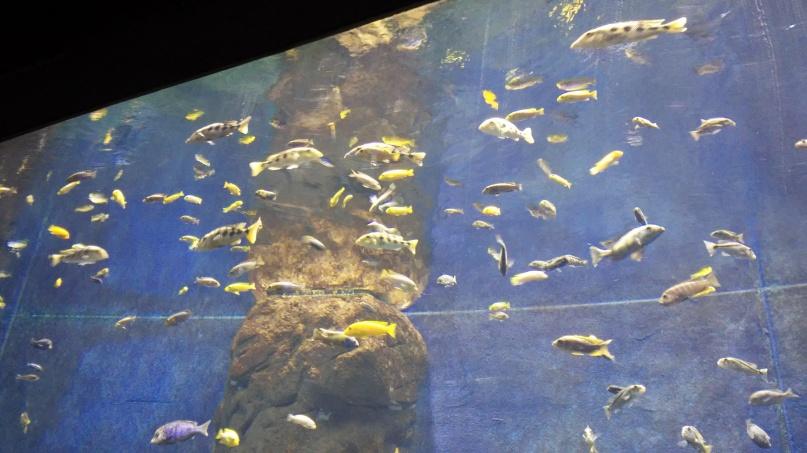 dużo rybek