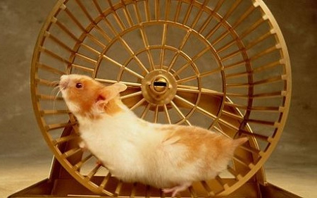 ham-wheel1