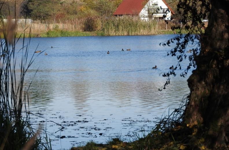 brzeg leśny kaczki dom