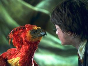 Feniks_patrzący_na_Harrego_Pottera