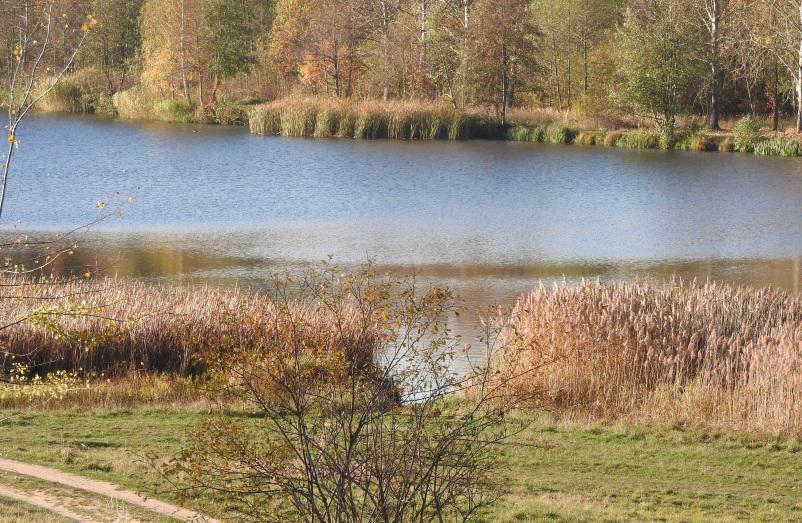 krzak, jezioro, las