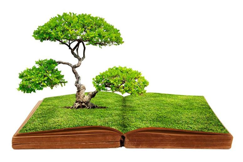 bigstock-a-big-tree-growth-from-a-book-42124156