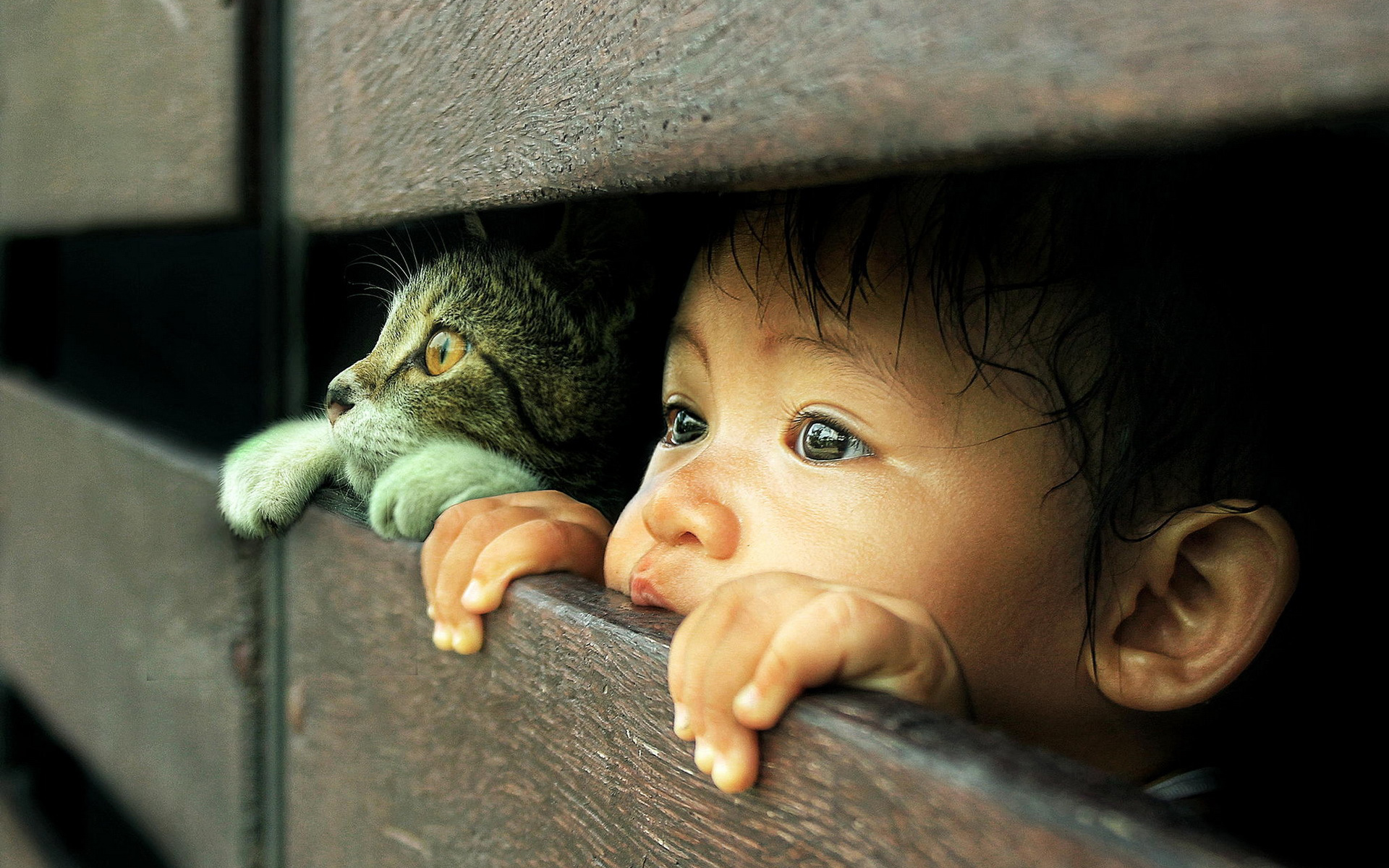 photography-admirable-photography-animal-baby-also-human-baby-in-cat-and-kid-peeking-hd-wallpapers-widescreen-wallpapers-animal-photography-cats-peek-re