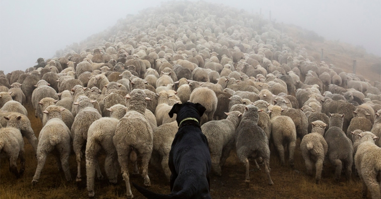 working-dog-photography-shepherds-realm-andrew-fladeboe-fb
